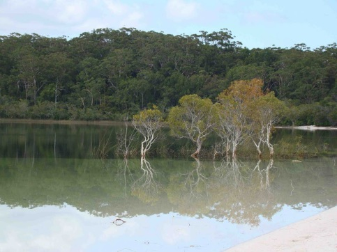 Of all of Fraser Island's natural features the most popular and famous Icon is Lake McKenzie (Boorangoora)
