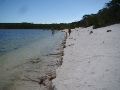 Beach erosion on Boorangoora's second beach reflects water level rises — 15/3/13