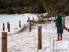 Lake McKenzie (Booranggoora) Beach Feb 2011. It had been modified by plantations, garden walls and fences