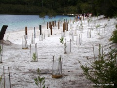 Lake McKenzie (Booranggoora) Beach Feb 2011 modified with fencing, matting over the sand and a plantation