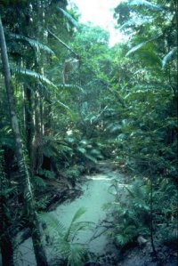 Wangoolba Creek