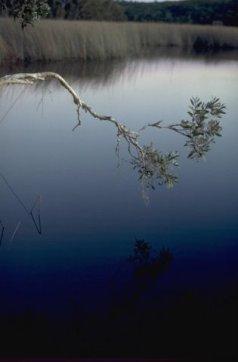 Ocean Lake reflections
