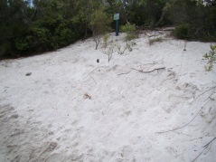 The location of Boorangoora Photo Monitoring pole on 15/3/13