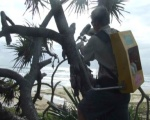 QPWS staff, stem injecting Pandanus at Happy Valley February 2012
