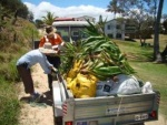 Another load being taken to the Eurong Waste Transfer station. The bags are full of Clivia lilies found going feral at Eurong and another large infestation of sisal has been identified.