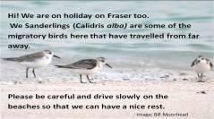 12_Shorebirds