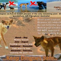 8_Keep Dingo Safe