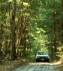 Fraser forest track