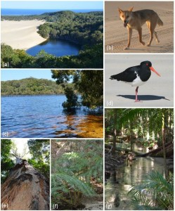 Figure (2) from paper: Iconic landscapes and biota characteristic of K'gari-Fraser Island.Fig b Debra Livingston; Fig d Mike Weston