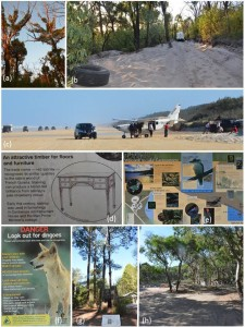 Figure (3) from paper: Threats to iconicity, and contrasting interpretation materials in a World Heritage area, K'gari-Fraser Island. All photographs Grant Wardell-Johnson.