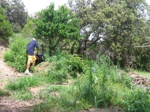This photo captured a person tipping out lawn clippings, adding to the weed problems at 'Problem Corner'