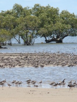 Few places in Australia offer such easy access to a comparably large assemblage of birds