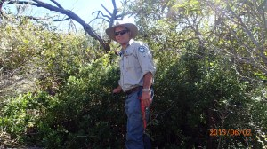 Ranger Blair O'Connor with recently located Bitou bush