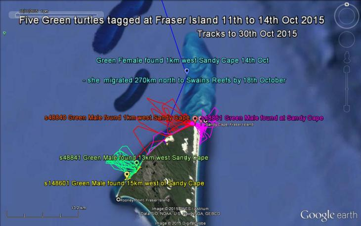 5 Green turtles tagged at Fraser Island 11 to 14 Oct 2015 - tracks to 30 Oct 2015
