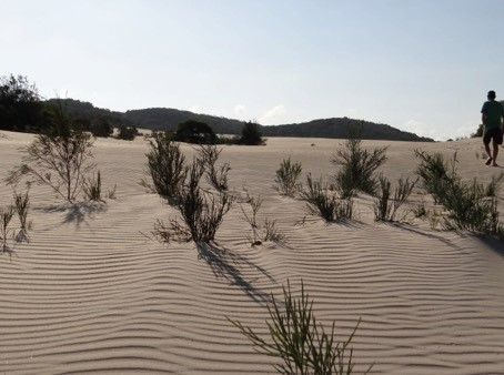 dune system 1