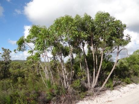 dune system 6