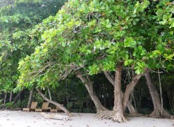 BeachAlmond2